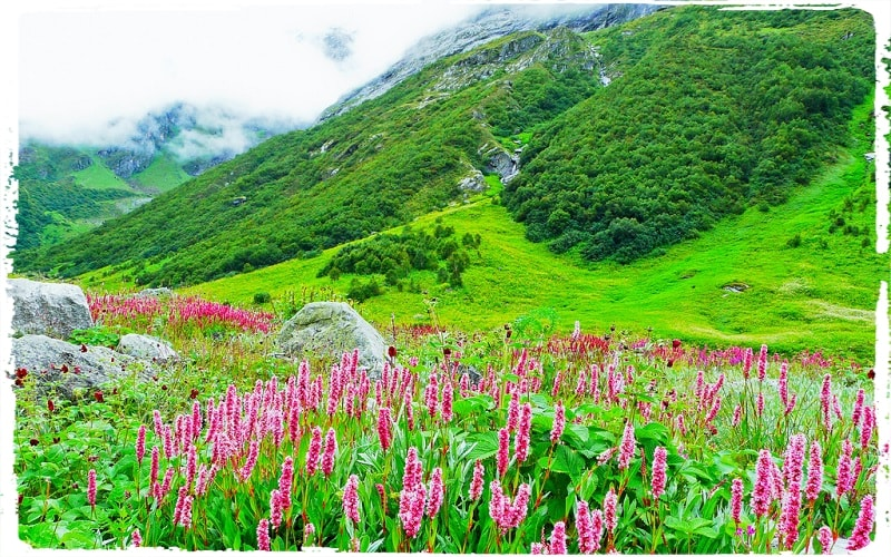 valley of flowers trek